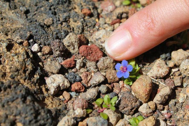 The smallest flower that ever was.